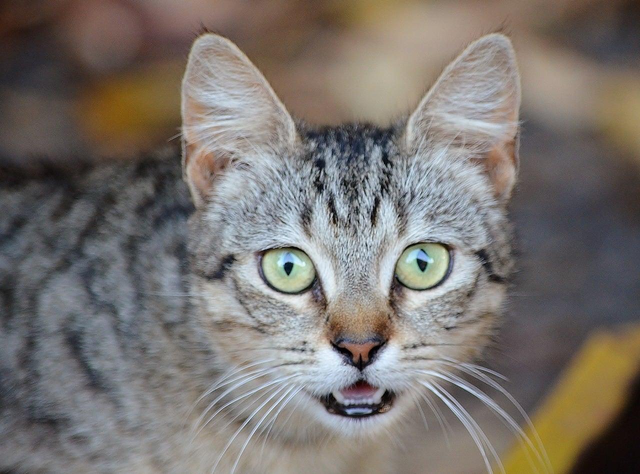 katzenern hrung warum d rfen katzen keine essensreste haben ich liebe katzen. Black Bedroom Furniture Sets. Home Design Ideas