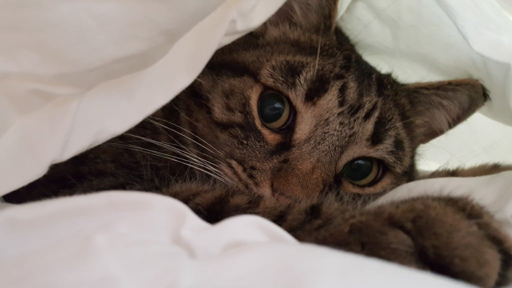 Katzen Foto Kristin Und Mexx Guten Morgen Ich Liebe Katzen