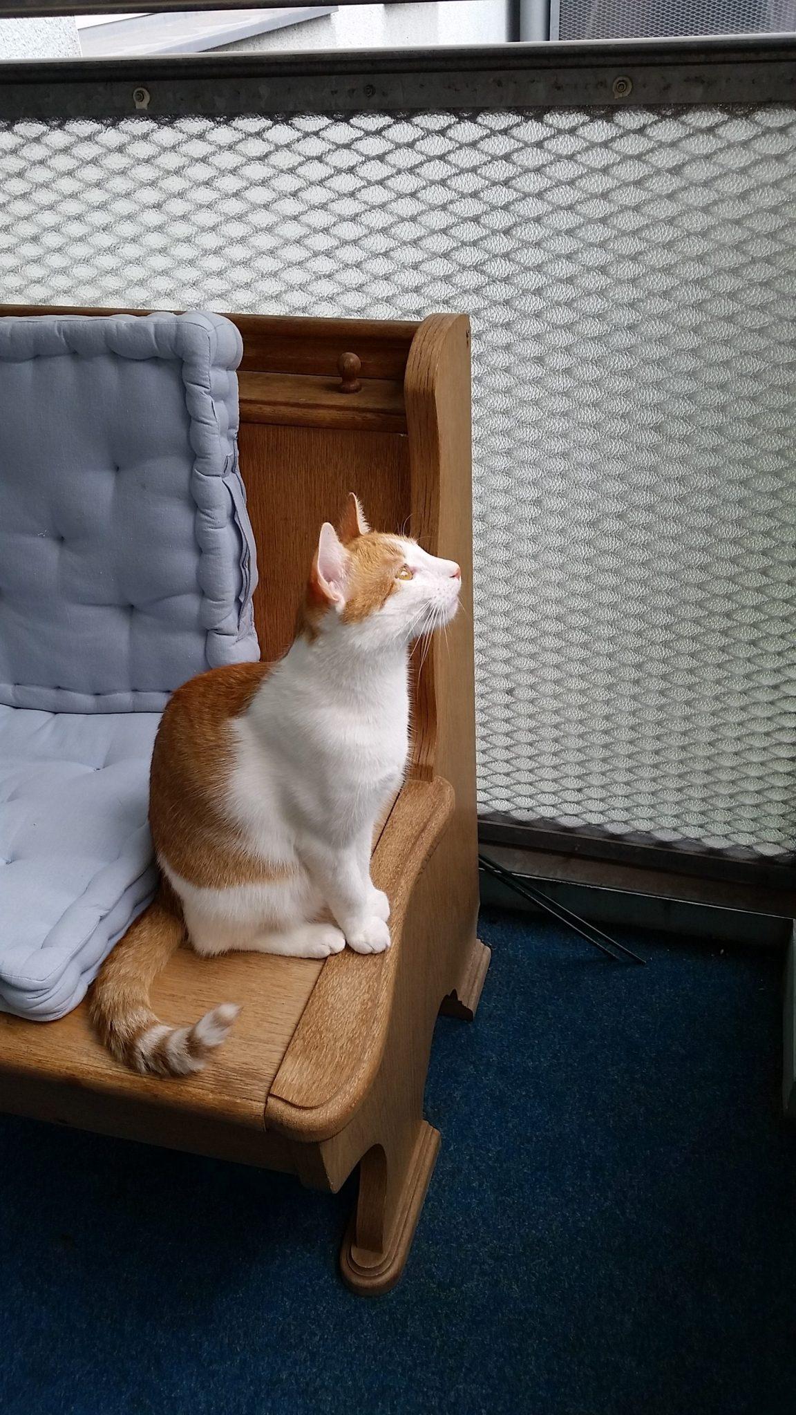 Katzen Foto: Grit und Kuno - Mein stalker