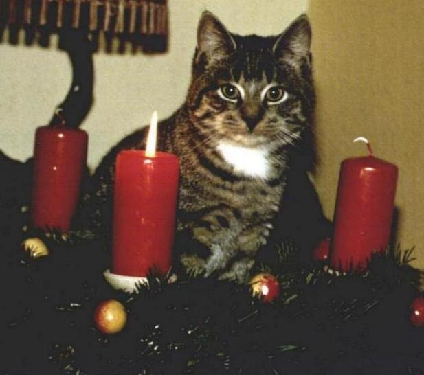 Moppel_Advent