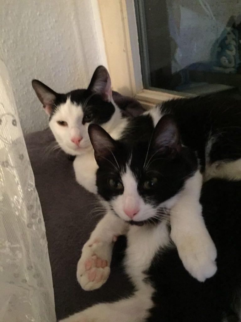 Katzen Foto: Nicole und Selim und Salima - Schmusekatzen