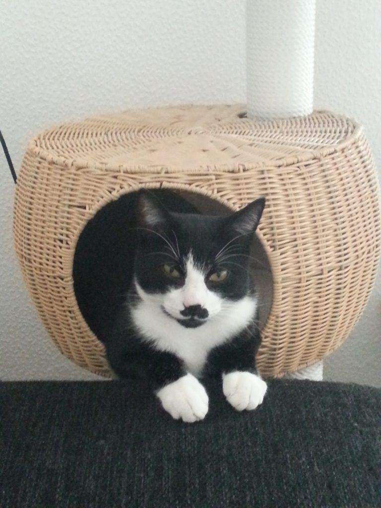 Katzen Foto: Sandra und Felix - Cooler Türsteher