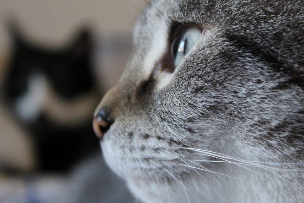 Katzen Foto: Sandra und Emma und Felix - Moments