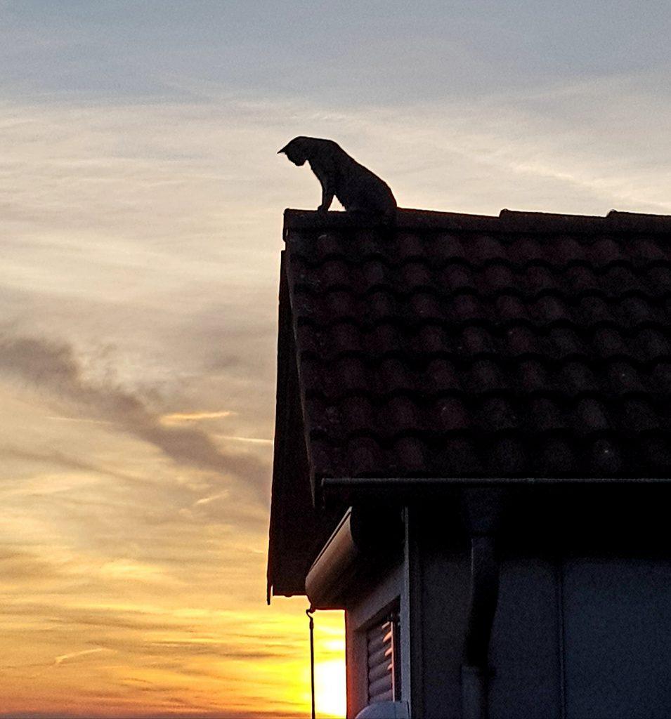 Lucky LIEBT das  Dach