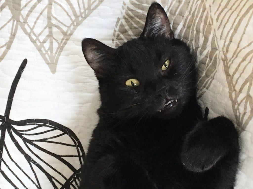 Unser kleiner Vampir