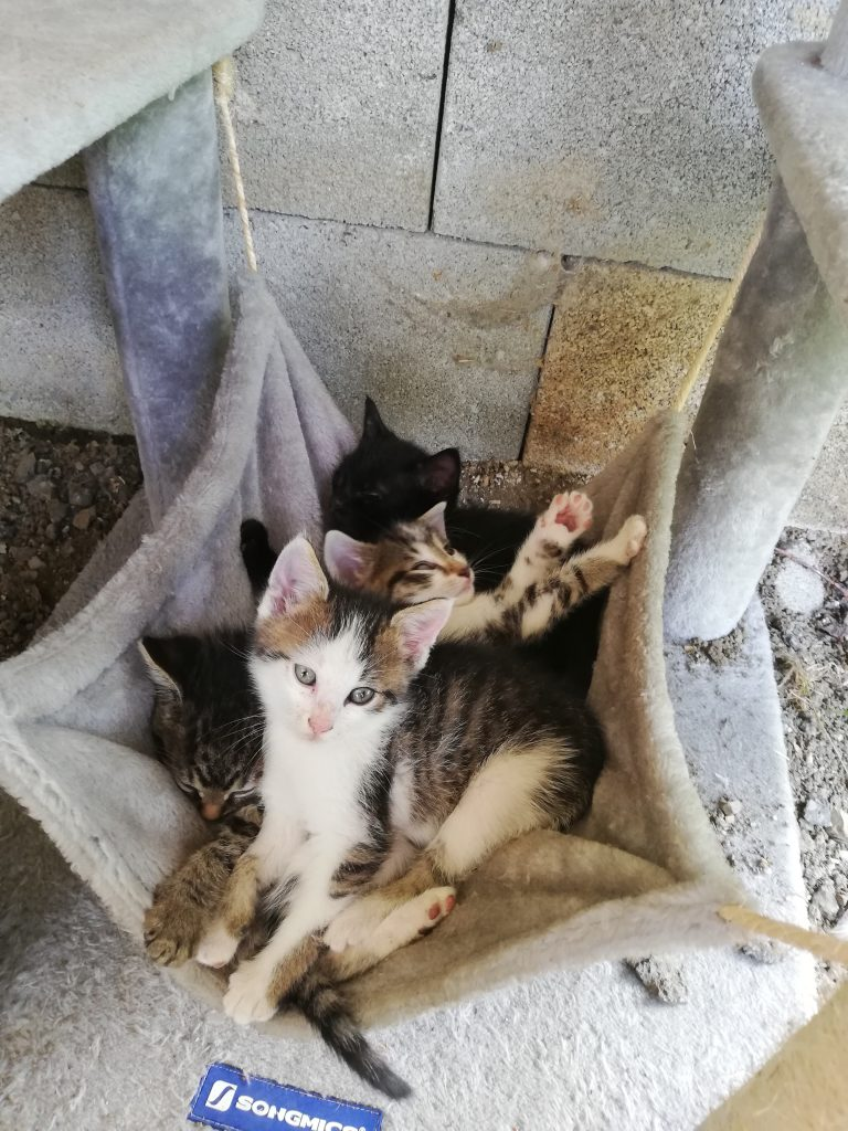 Katzen Foto: Melanie und Geschwisterkuscheln - Gruppenkuscheln